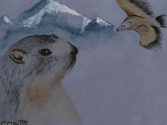 Marmotte et Vautour fauve des Hautes Alpes