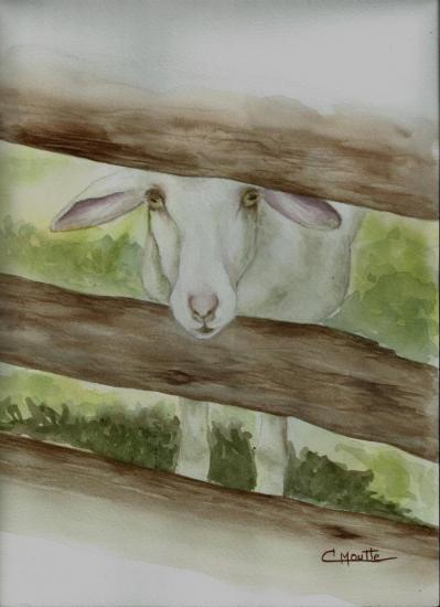 Mouton du Champsaur